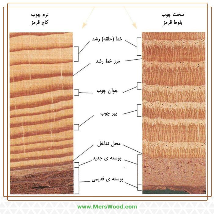 تفاوت-نرم-چوب-و-سخت-چوب