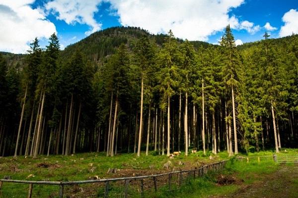 جنگلهای اتریش
