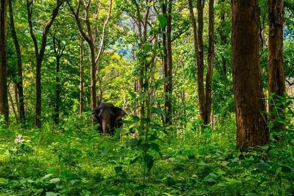 غنیترین کشورها از نظر داشتن درخت و جنگل قسمت دوم