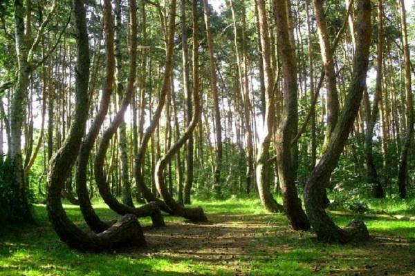 غنیترین کشورها از نظر داشتن درخت و جنگل قسمت اول