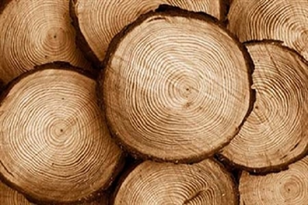 اصلاح شيميايي چوب