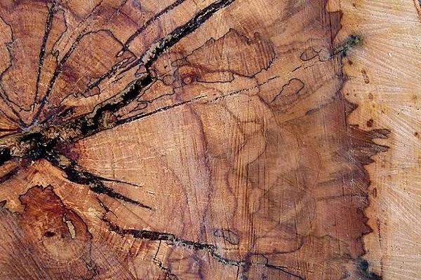 اصلاح آنزيمي چوب