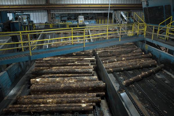محصولات جنگلی رزولوت