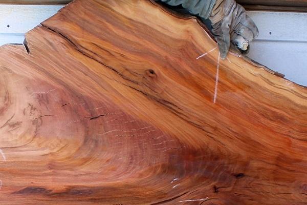 معرفی چوب درخت چنار
