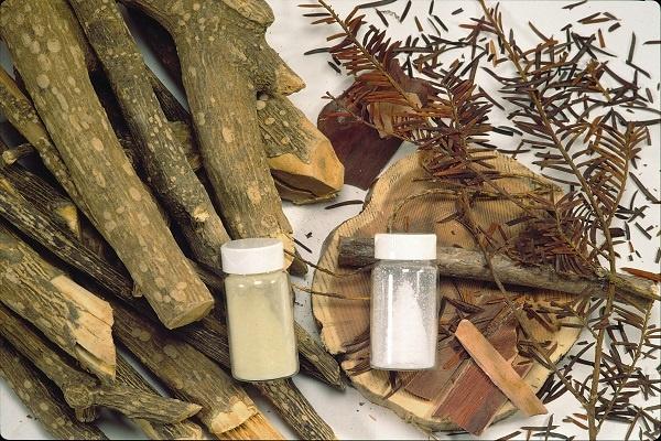 معرفی چوب درخت سرخدار