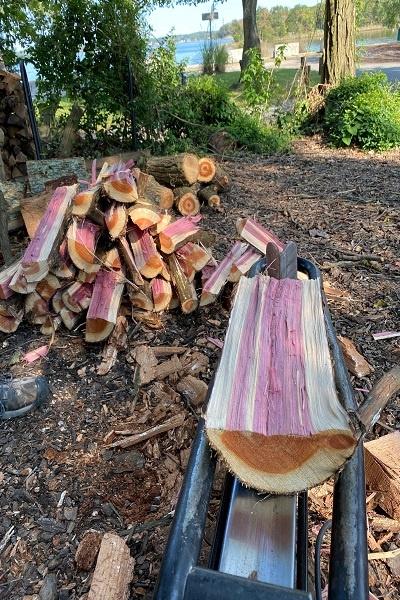 معرفی چوب درخت سدار