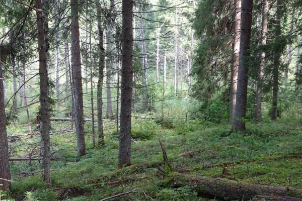 جنگلهای تایگا