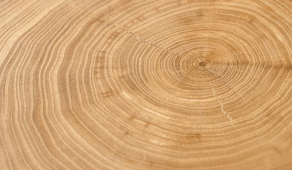 معرفی چوب درخت نارون