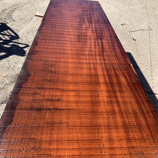 معرفی درخت و  چوب ماهاگونی (آکاژو)